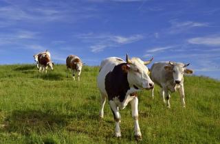 Heeft de biologisch-dynamische landbouw Rudolf Steiner wel nodig? - Deel 2