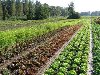 Heeft de biologisch dynamische-landbouw Rudolf Steiner wel nodig? - Deel 1